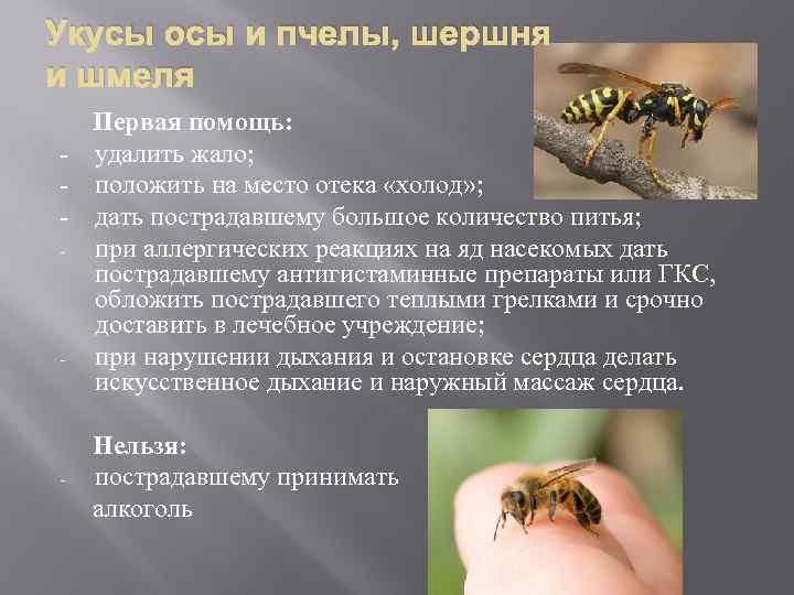 Укус пчелы, осы: первая помощь взрослому и ребенку — вичугские новости