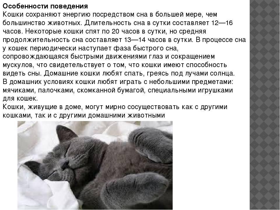 Почему кошки мурлыкают – ответ на вопрос ребенка 3-5 лет