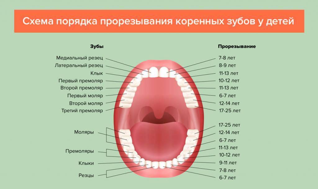 Прорезывание зубов: порядок, симптомы и лечение прорезывания зубов