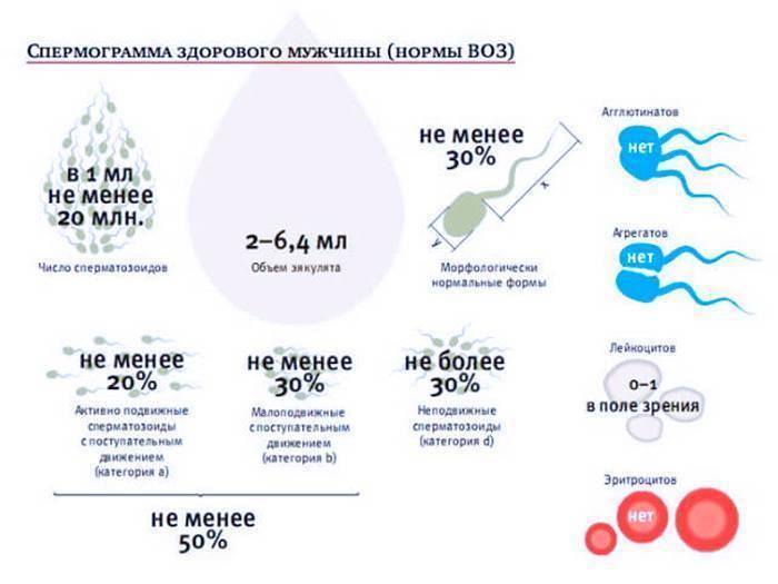 Активность сперматозоидов: от чего зависит и как улучшить * клиника диана в санкт-петербурге