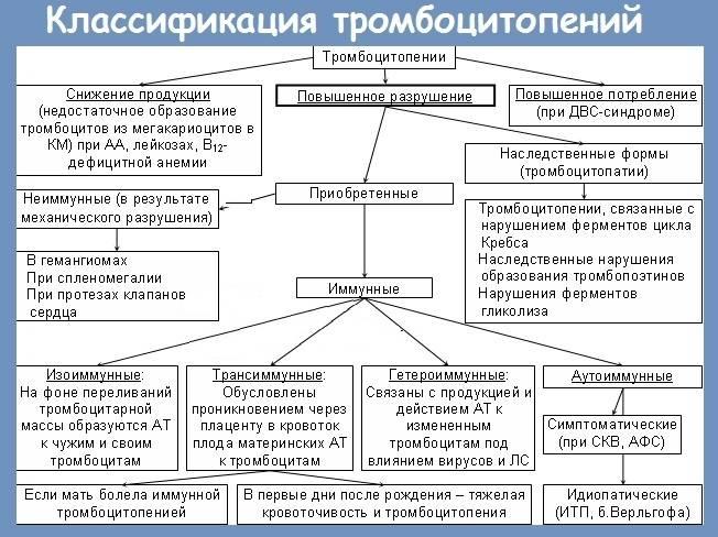 Тромбоцитопеническая пурпура (болезнь верльгофа). симптомы. диагностика. лечение.