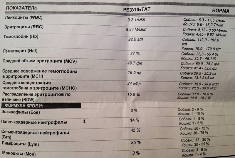 Анализ на «дисбактериоз»: пожалуйста, хватит