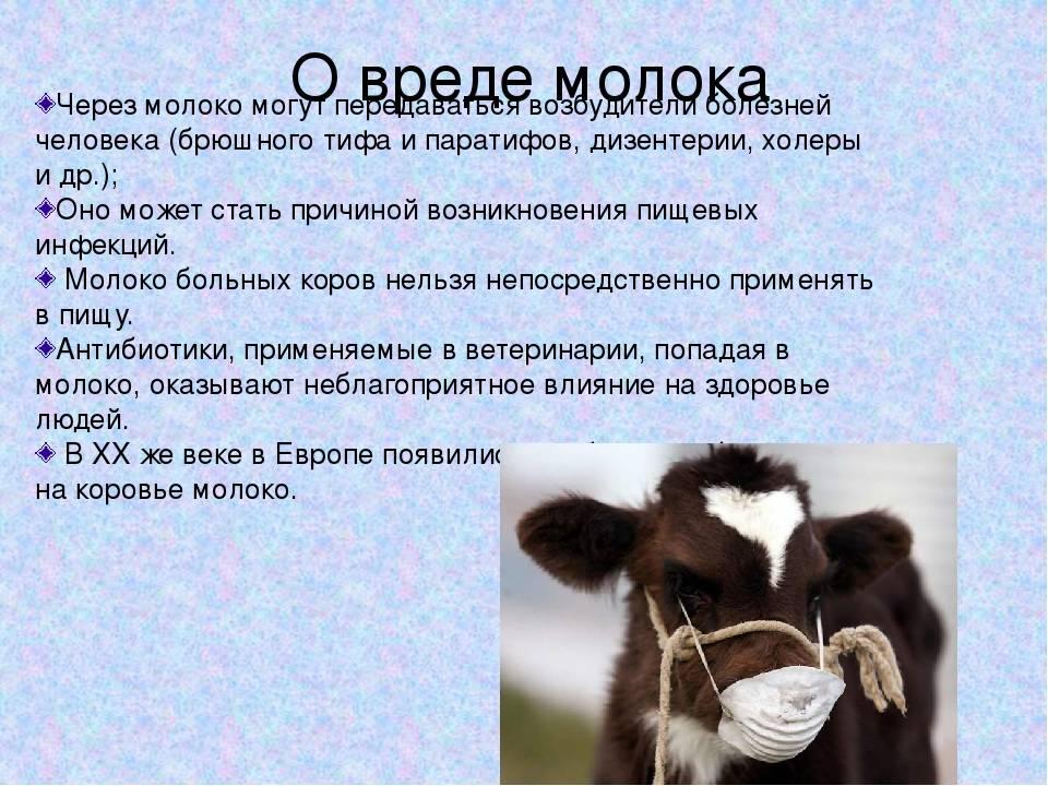 Действительно ли нужно ребенку коровье молоко?