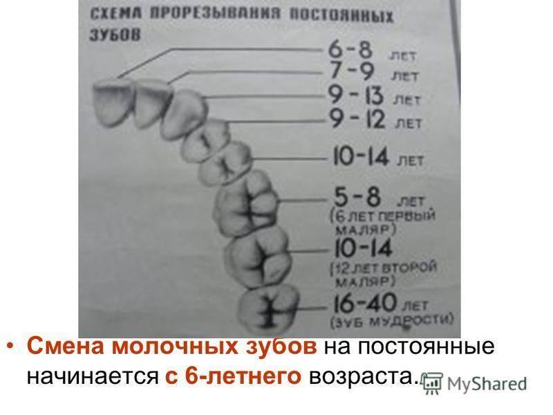 Смена молочных зубов на постоянные у детей схема и порядок