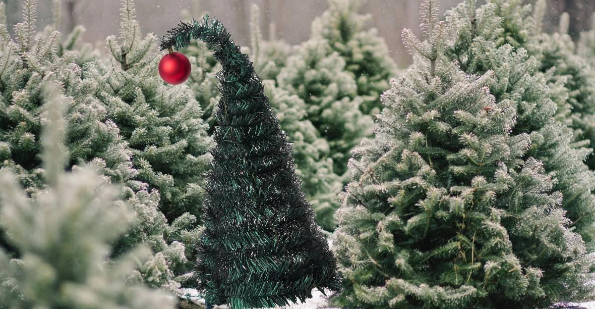 Как выбрать живую или искусственную елку на новый год | домашняя энциклопедия