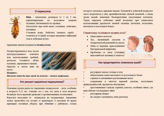 Как уберечь детей от педикулеза: лечение и профилактика вшей