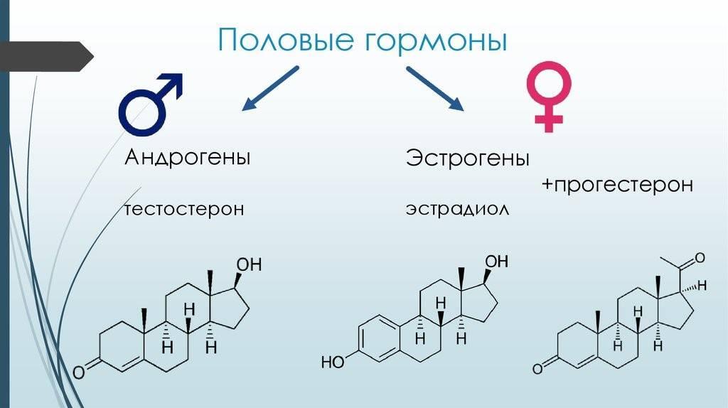 Анализы на гормоны: виды, описание, расшифровка