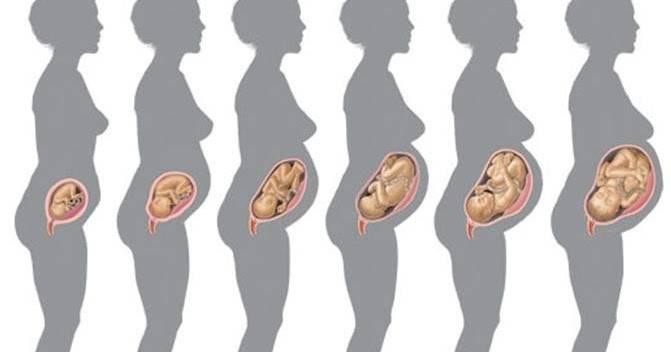 Как должен шевелиться ребенок (первые толчки при беременности)
