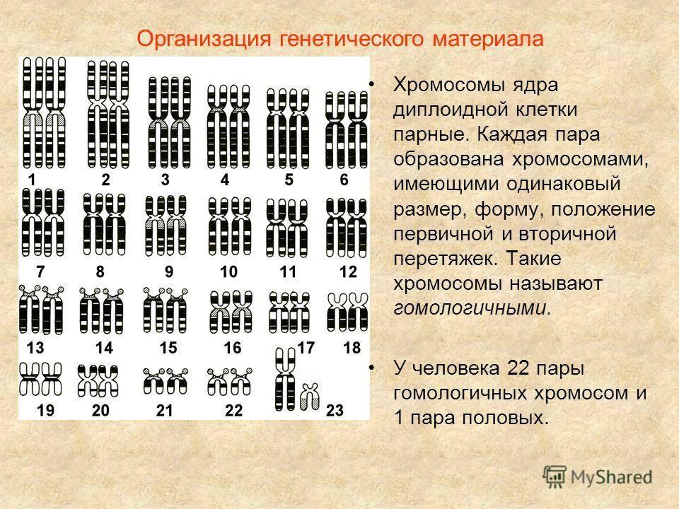 Пренатальный скрининг; хромосомные аномалии   eurolab   генетика