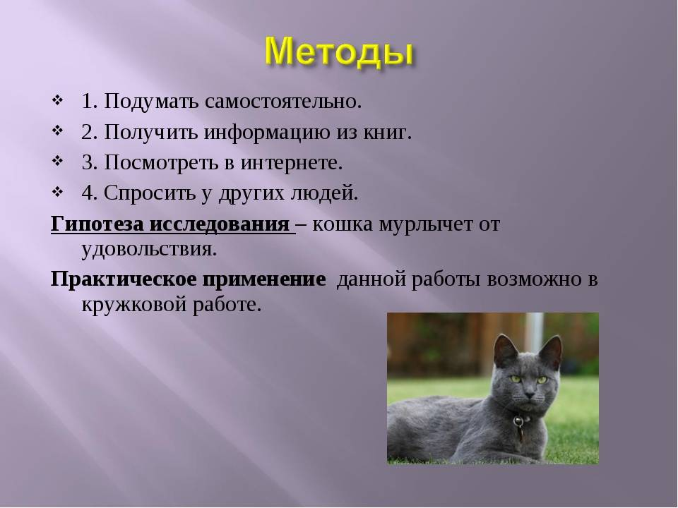 Почему кошки мурлыкают: смысл урчания животного в зависимости от интонации издаваемых звуков