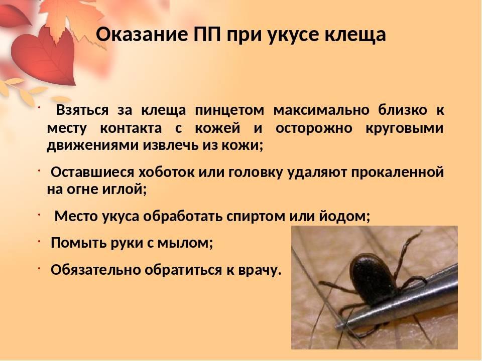 Аллергия на насекомых (инсектная аллергия)