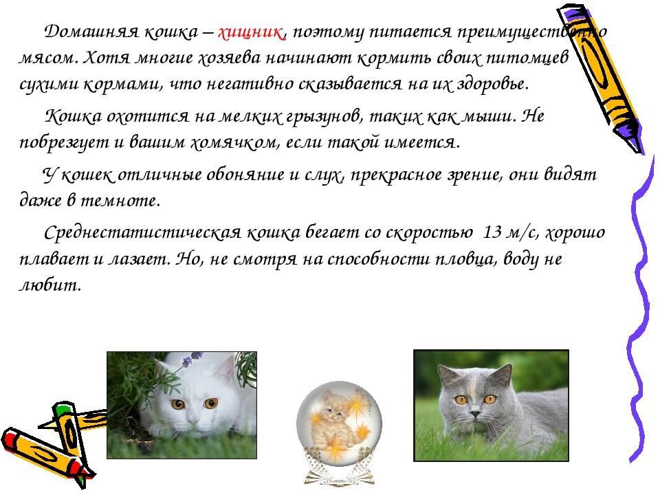 Почему кошки мурчат: отвечает интересно и с фактами