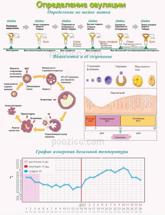 Характерные симптомы ановуляторного цикла