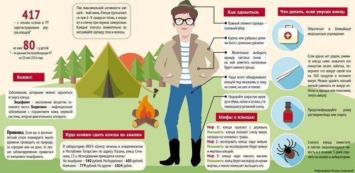 Средства защиты собаки от клещей и комаров