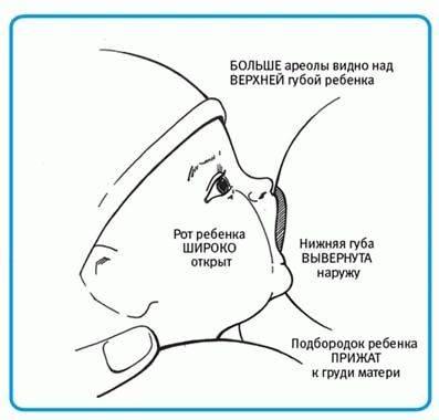 Массаж женской груди: виды и техника | компетентно о здоровье на ilive