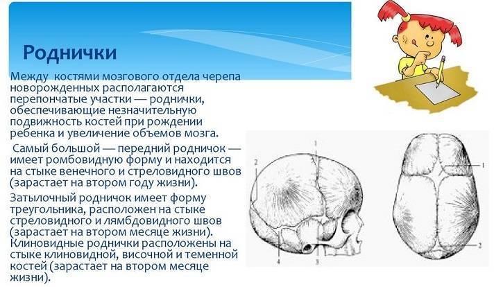 Тім'ячко на голові малюка: коли заростає і які зміни мають насторожити