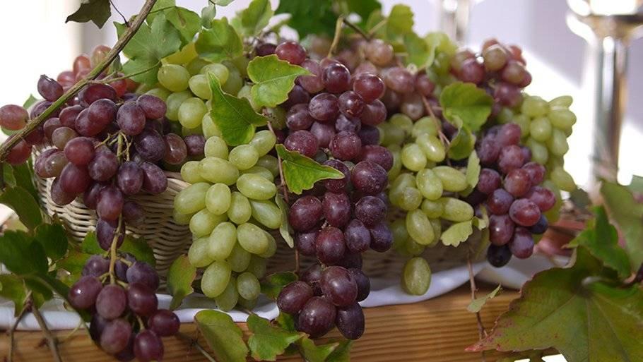 Виноград при грудном вскармливании: можно ли маме в первые 3 месяца (зеленый, белый и черный)