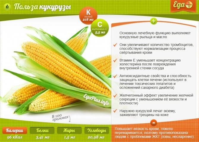 Можно ли кушать кукурузу при грудном вскармливании: ее польза и вред для здоровья