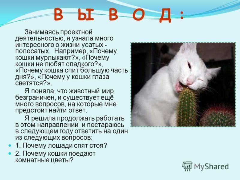 Почему кошки мурлыкают - ответ на вопрос ребенка 3-5 лет - медицинский портал