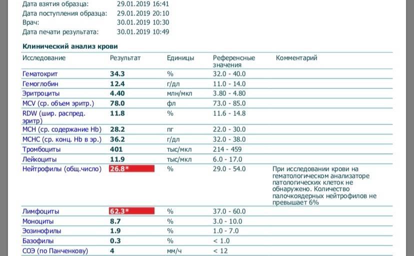 Нейтрофилы в крови: нормы, причины отклонений