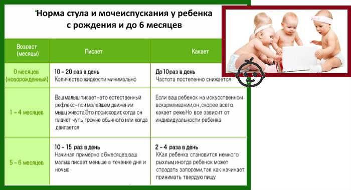 Как часто должен какать новорожденный на грудном и искусственном питании?