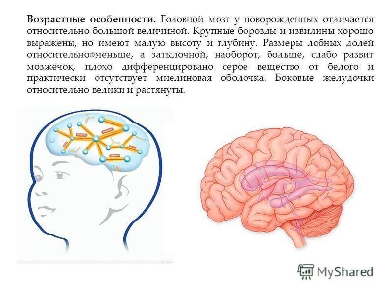 Борозды и извилины головного мозга, больших полушарий — большая медицинская энциклопедия