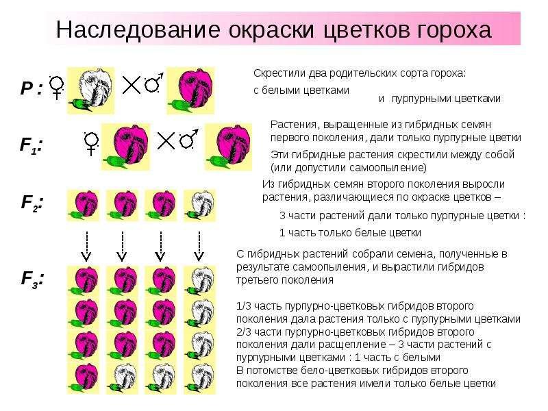 Меняется ли цвет глаз у новорожденных? когда меняется цвет глаз у новорожденных: таблица