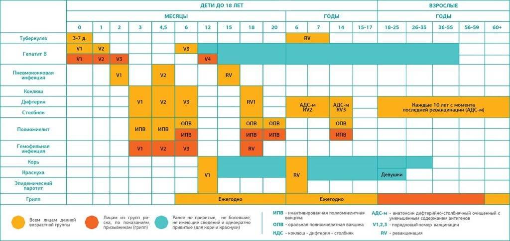 Календарь прививок для взрослых