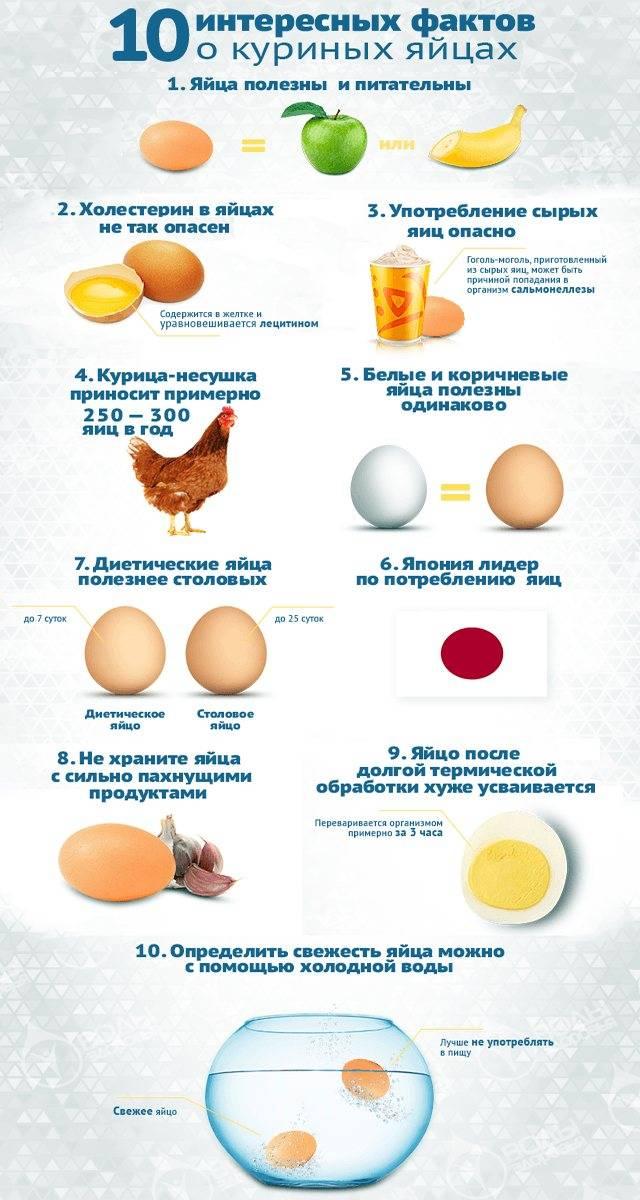 Как вводить яйцо в прикорм ребенку и какие яйца можно давать