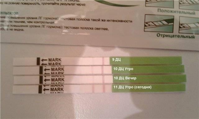 Тест на овуляцию при беременности: какова точность результата? / mama66.ru