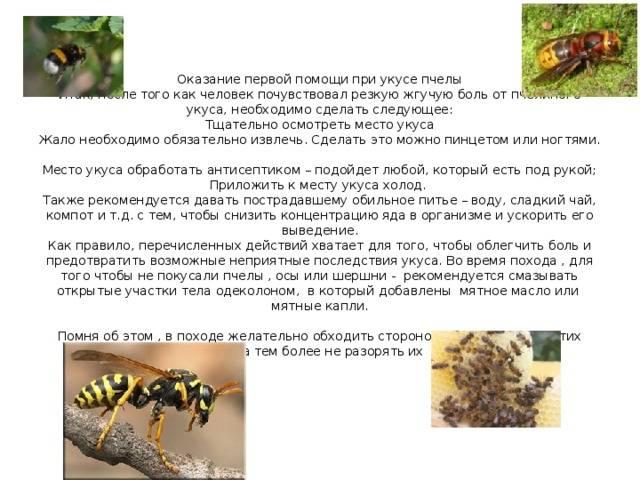 Укусы насекомых: как оказать первую помощь и когда обращаться к врачу | москва