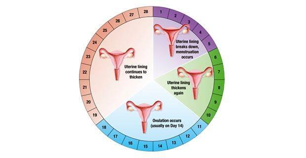Как понять, что скоро начнутся месячные, как определить, когда начнется менструация