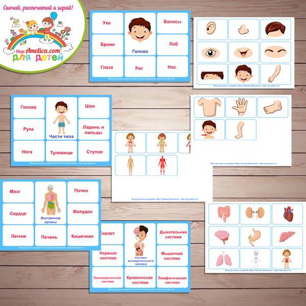 Дидактические игры с ребенком на изучение частей тела