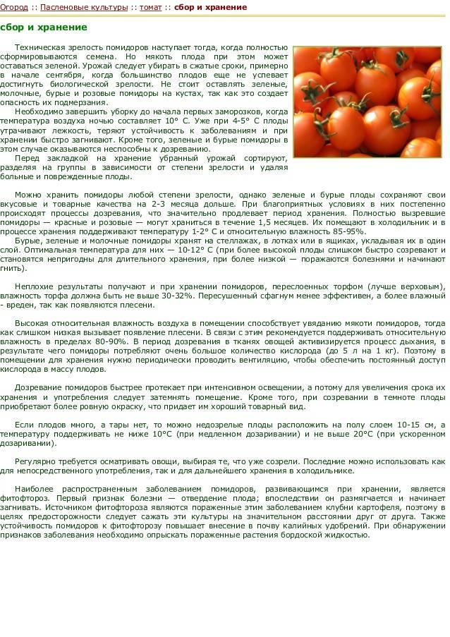 Когда ребенку можно давать помидор? 4 правила и 4 главных противопоказания