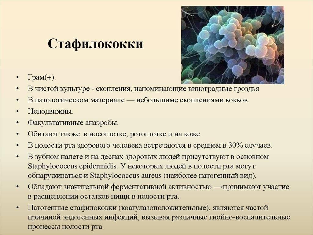 Посев на золотистый стафилококк (s. aureus) без определения чувствительности к антибиотикам, количественно