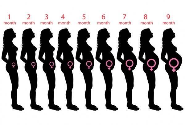 Видео: Все этапы беременности