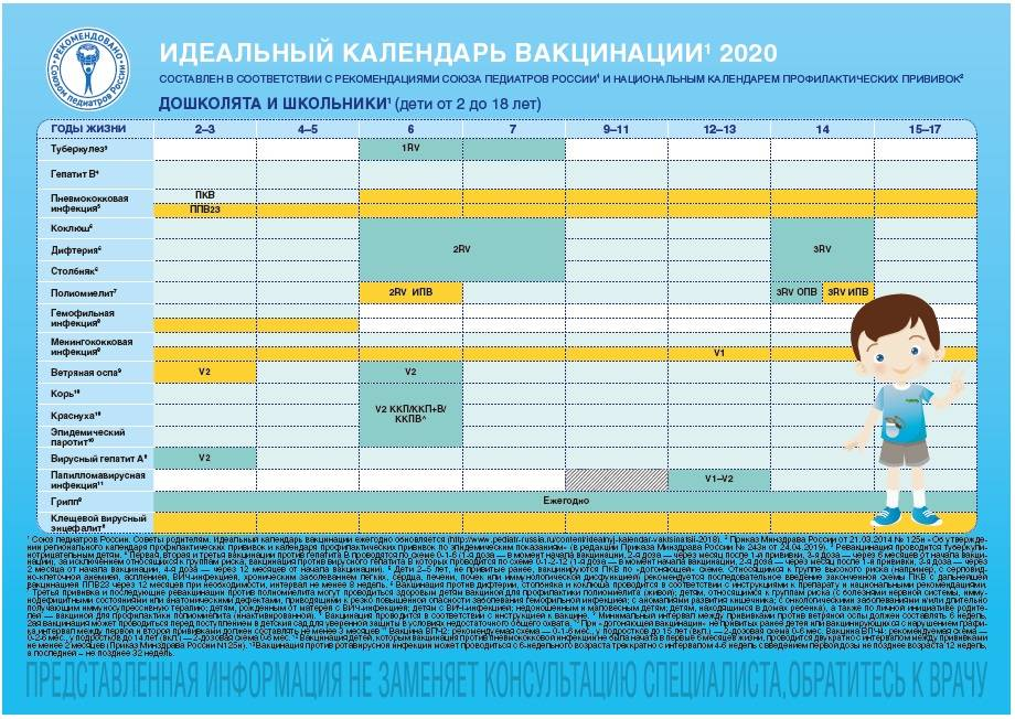 Национальный календарь прививок для детей и взрослых в 2020 году