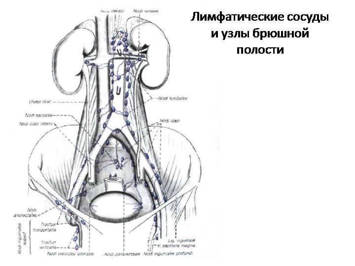 Метастазы в лимфоузлах | симптомы и лечение метастазов в лимфоузлах | компетентно о здоровье на ilive