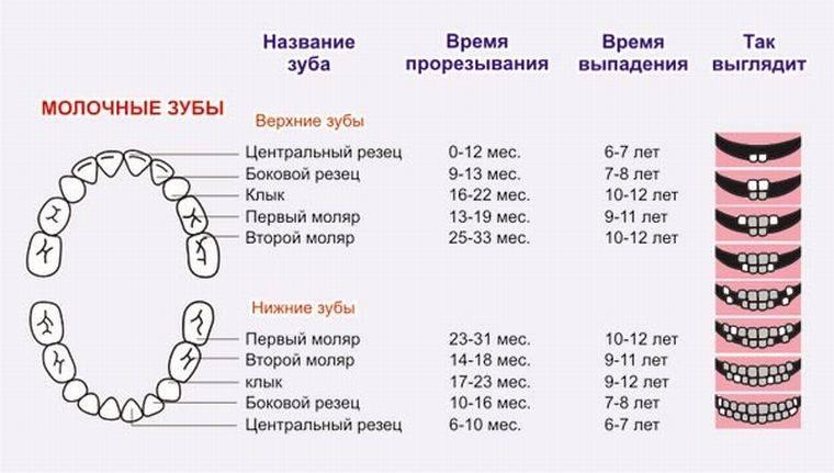 Может ли быть температура при прорезывании зубов у детей и сколько дней она держится?