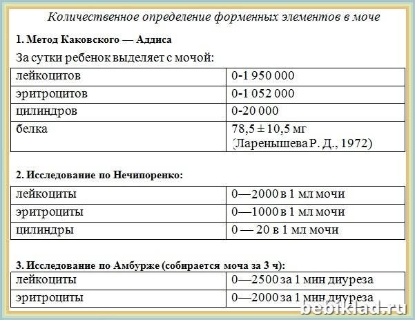Анализ мочи по нечипоренко - расшифровка. норма эритроцитов, лейкоцитов и цилиндров, причины повышения значений показателей