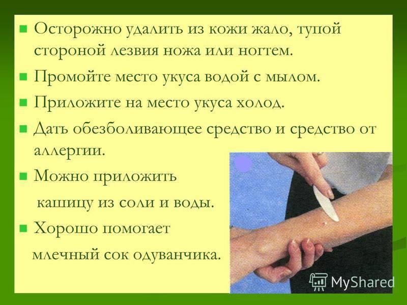 Первая помощь детям при укусах насекомых   служба дезинсекции дезстанция
