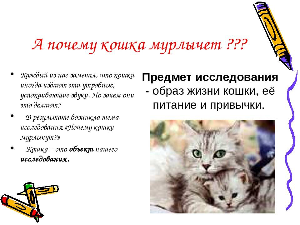 Топ-8 причин, почему мурлыкают кошки