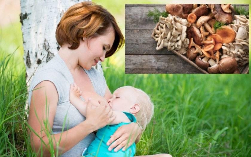 Шампиньоны при грудном вскармливании: можно ли их есть кормящей маме при гв, мнение доктора комаровского