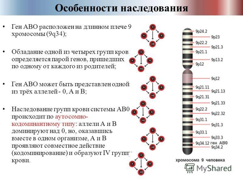 Генетические анализы: полиморфизм генов гемостаза (мутации гемостаза) и невынашивание беременности
