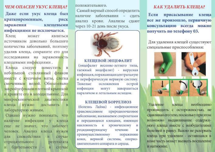 Аллергия на яд насекомых. лечение анафилаксии. что нужно знать врачу и пациенту | университетская клиника