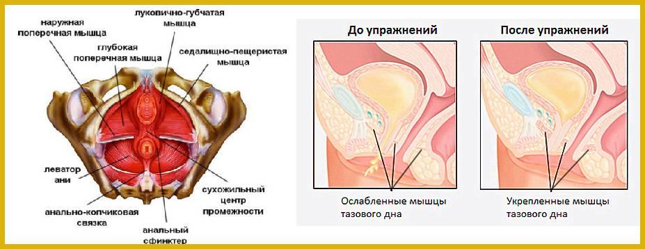 Как укрепить мышцы тазового дна после родов. топ-12 лучших и эффективных упражнений кегеля