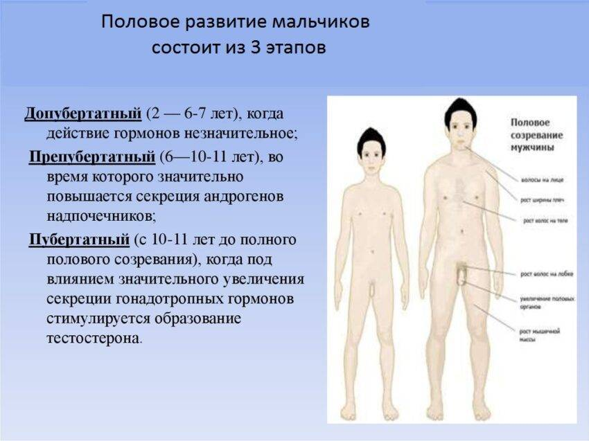 Изменения в организме девочки  в период полового созревания
