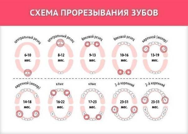 Прорезывание зубов: порядок, сроки, повышенная температура   | материнство - беременность, роды, питание, воспитание