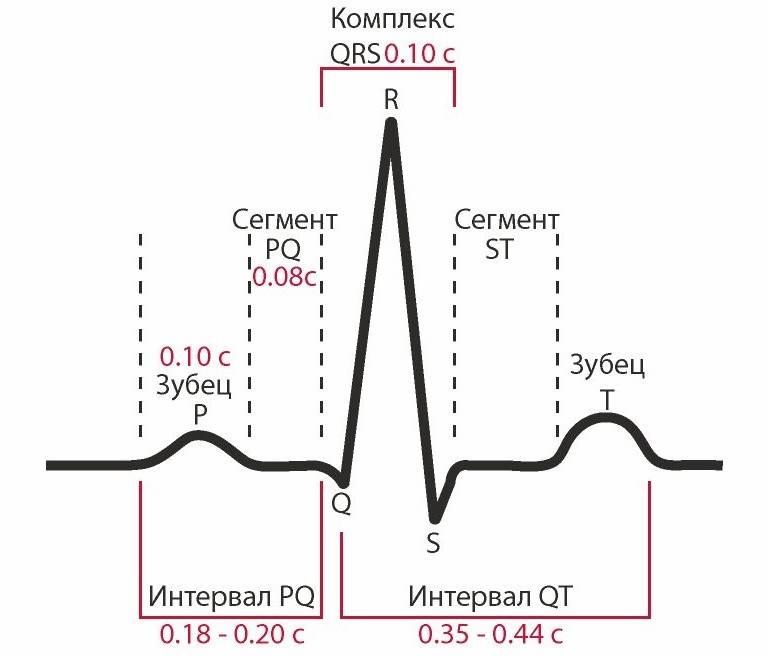 Электро кардиограмма в долгопрудном, результаты кардиограммы сердца и описание сердечного ритма