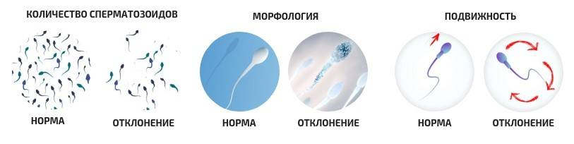 Плохая спермограмма: что делать и как улучшить показатели, чтобы зачать ребенка?